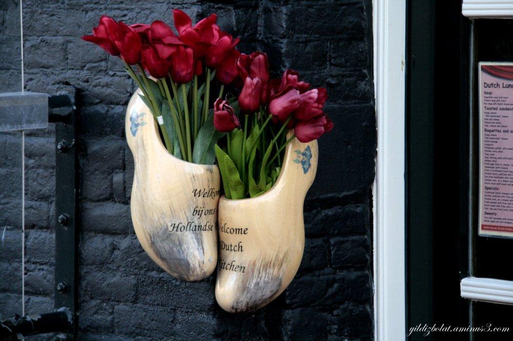 Tulips!!!!