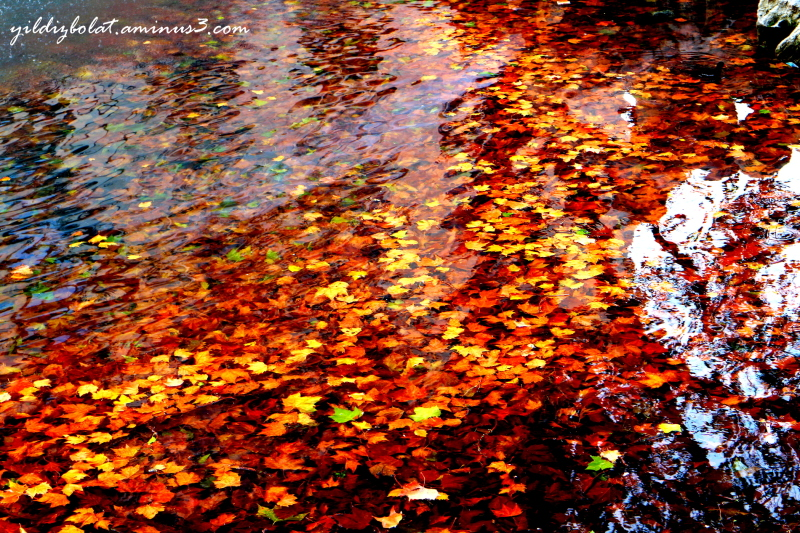 All of autumn in water...