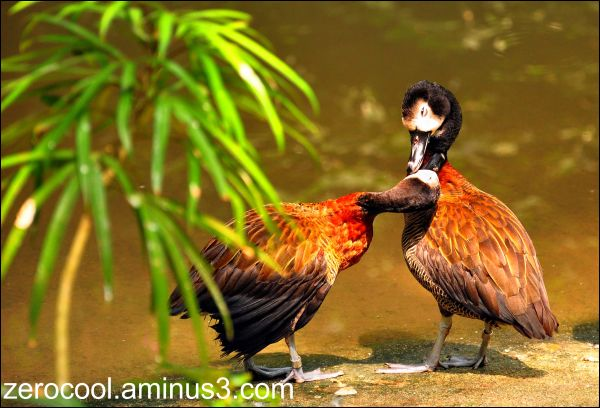 Love is in the air.. even for the animals..