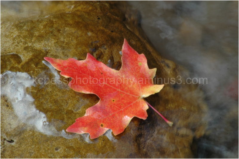 Single fall leaf on rock in middle of river