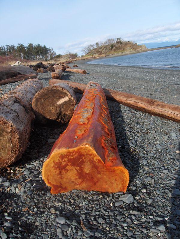 Beach, logs