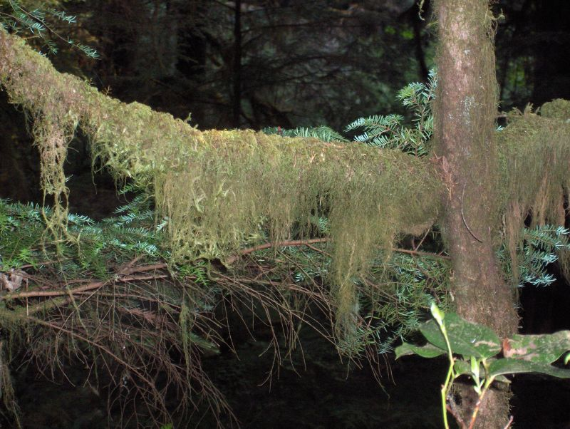 moss,  Tree, Englishman River