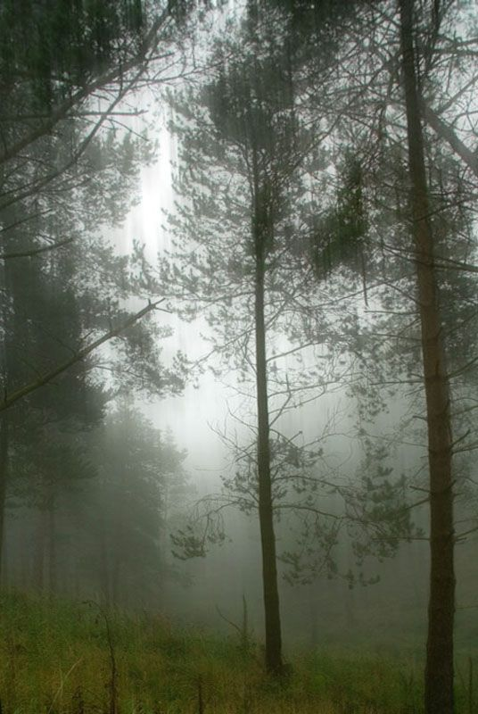 Macclesfield Forest mist
