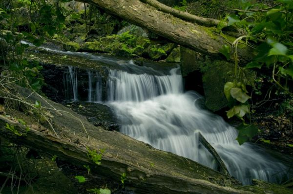 Tree trunks & water