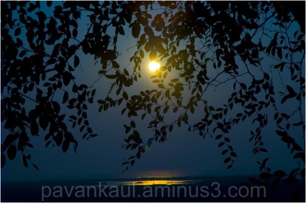 Moonrise seen through leaves of a tree on seaside
