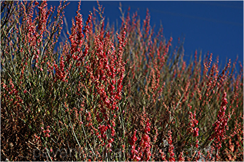 wild flowers on hills