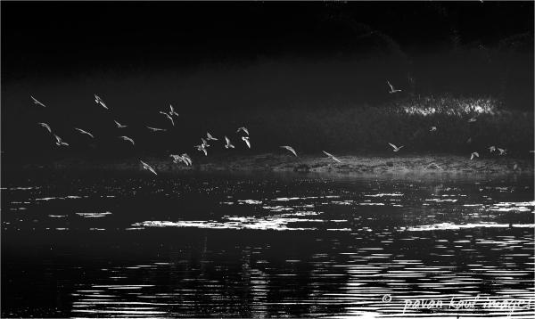 birds flying over creek