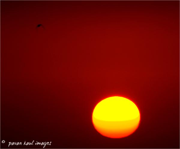 bird over city at sunset