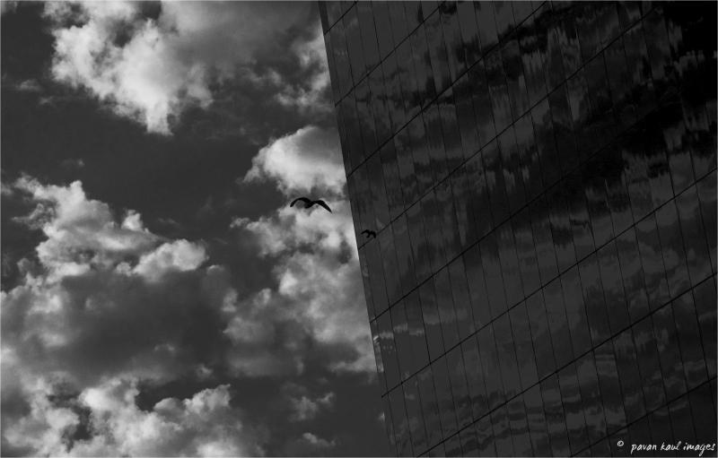 Reflection of a bird in flight