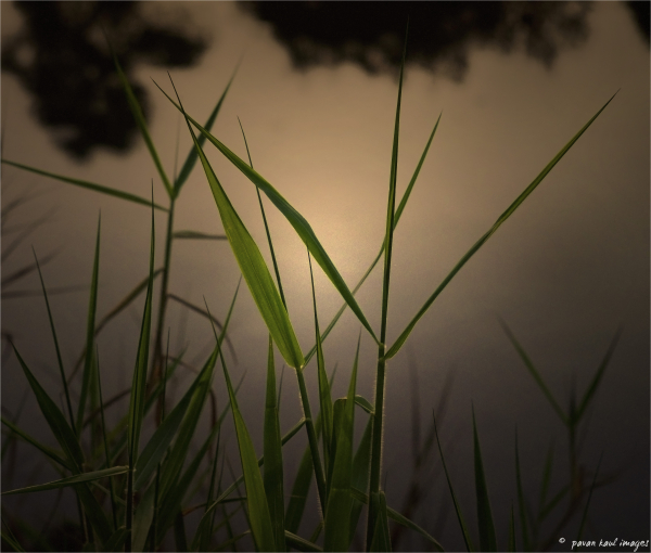 grass on polluted river banks