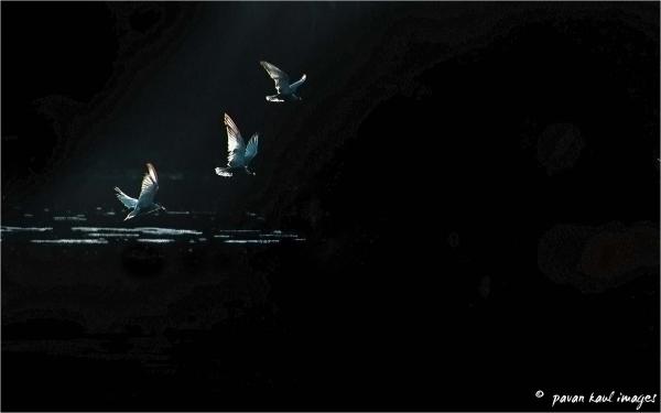 ray of light catches birds in flight