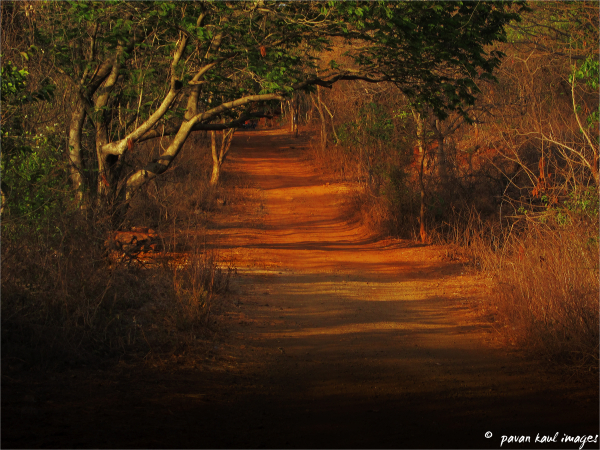 deep forest path at dusk