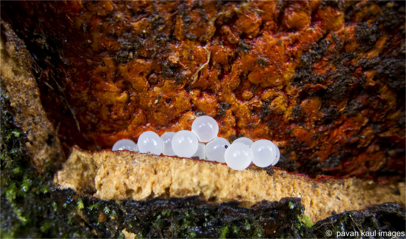 eggs on tree bark