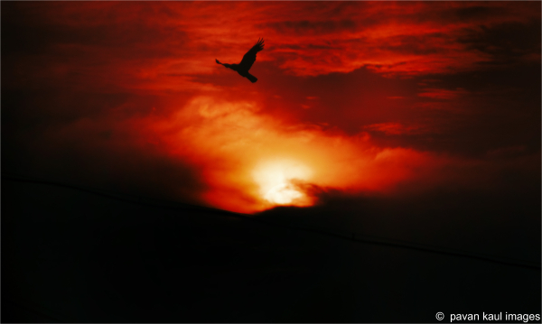 bird soaring in firey skies
