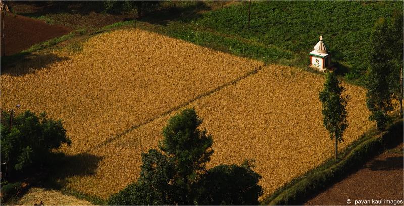 temple in fields