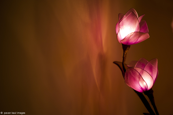 flower lights