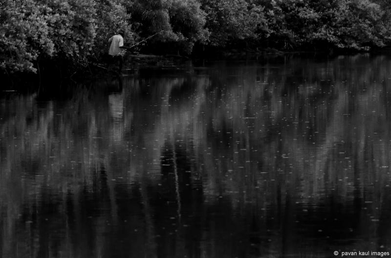 man fishing in mangrove