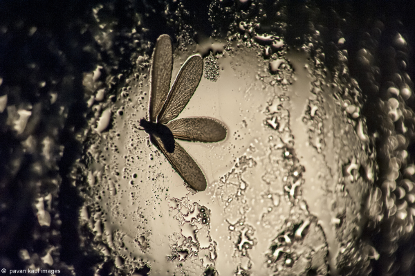 moth stuck to wet windowpane