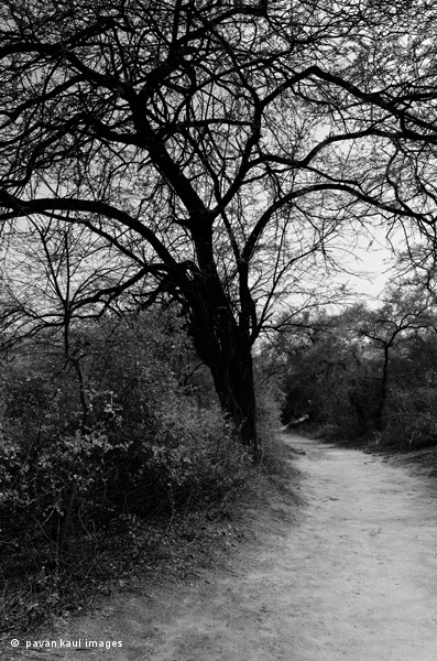 spooky tree and path