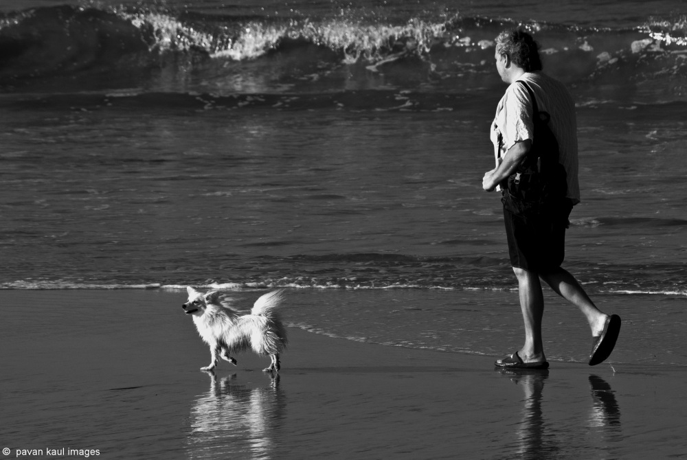 man walking with dog on beach in goa