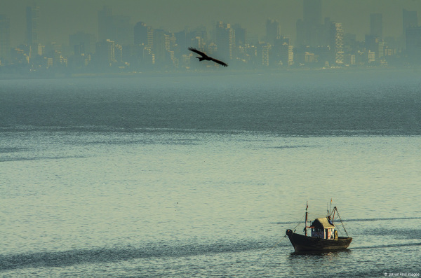 bird soaring fre over fishing boat in ocean