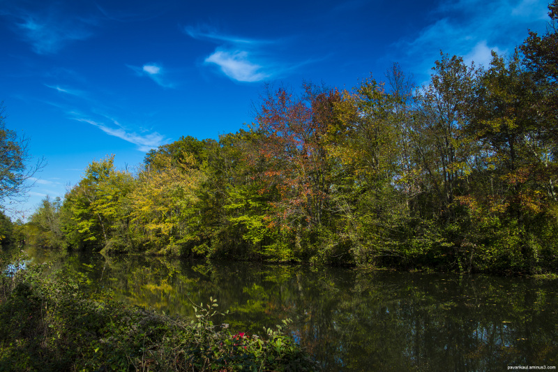 fall colors by the creek in new jersey