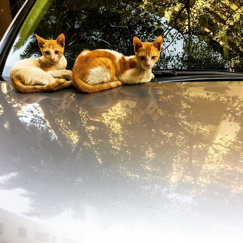 Cats on a car
