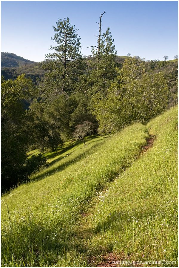 Trail at Henry Coe