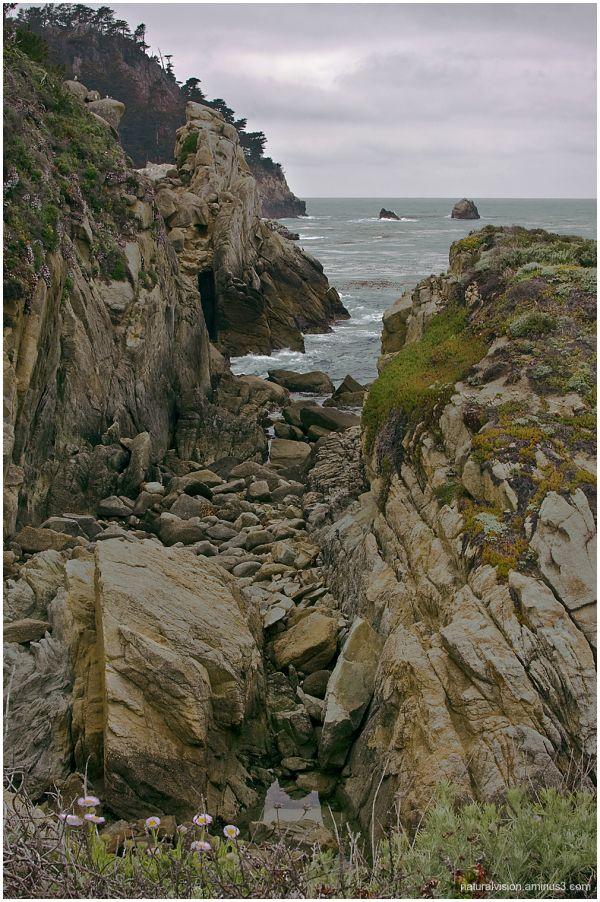 Pt. Lobos Shoreline