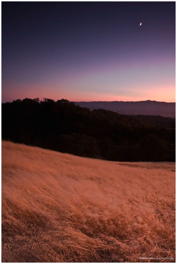 Coe sunset drescent moon