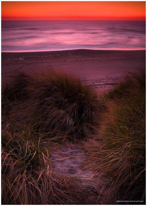 Bullard's Beach Dunes