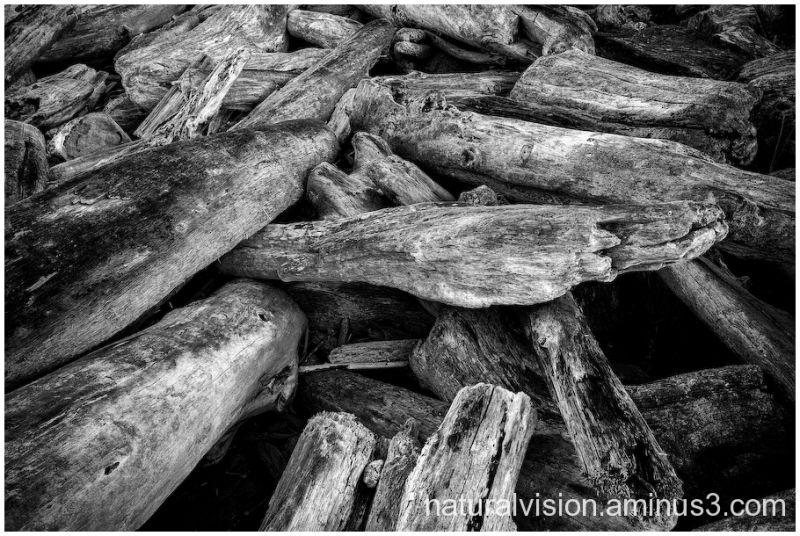 driftwood on bandon beach, oregon