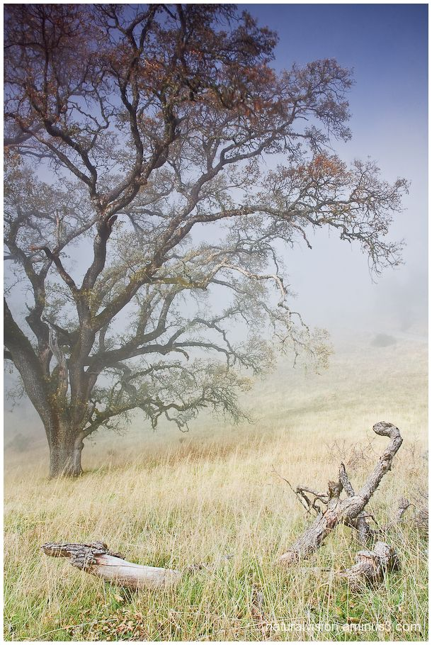 fog at Fremont Peak