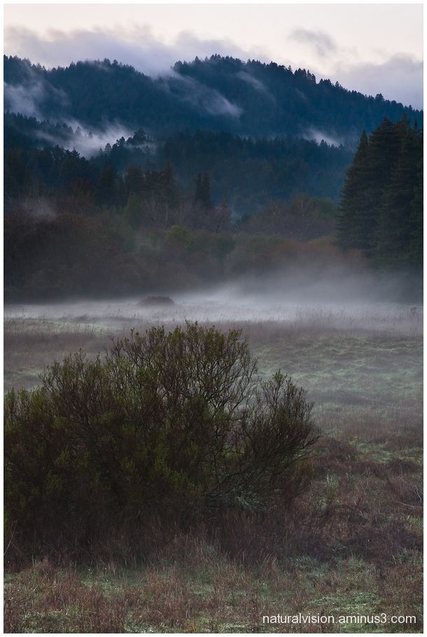 Henry Cowell State Park winter rain mist