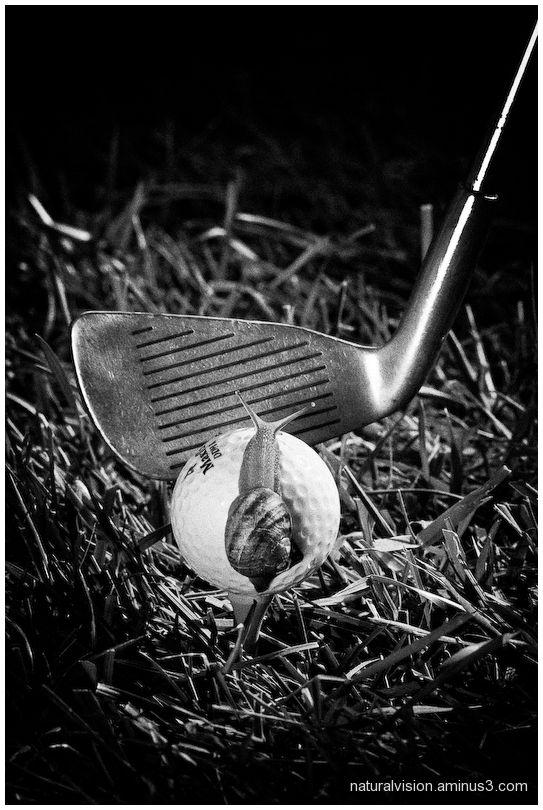 snail on golf ball