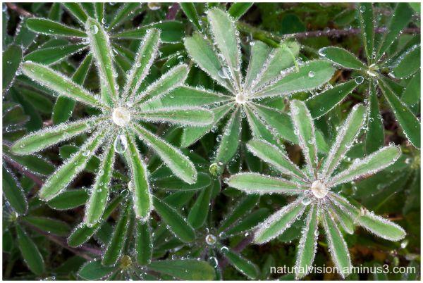 dew on weeds