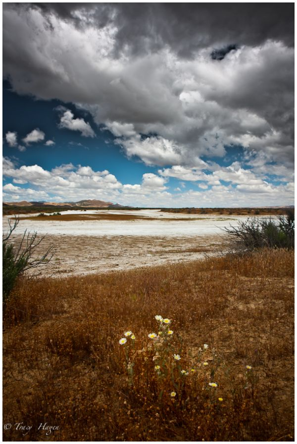 soda lake carrizo plain