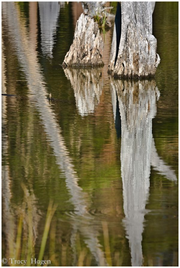 lundy canyon reflection