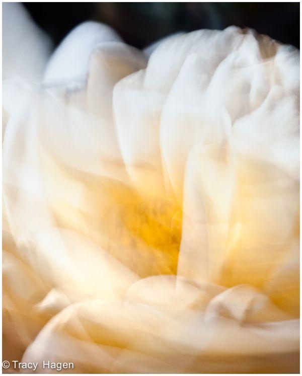 Flower Dance 2