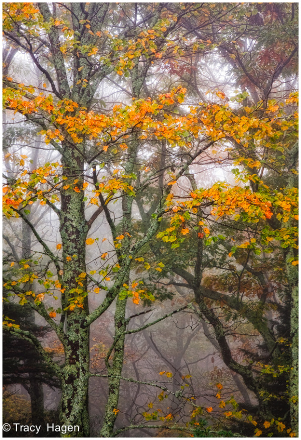 Foggy day on the Blue Ridge Parkway