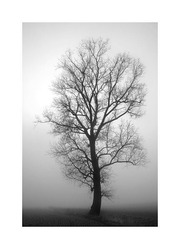 L'héritage du brouillard