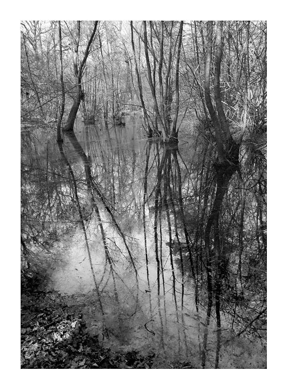 La forêt inversée