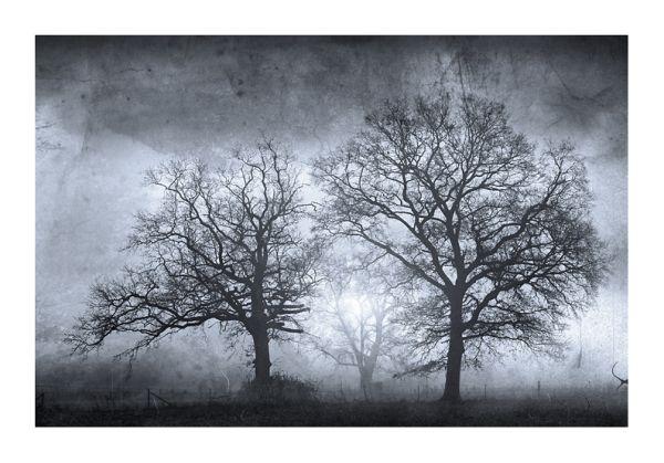 photo arbres atmosphère étrange