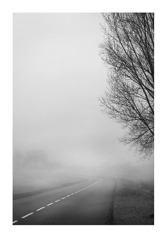 paysage route arbre brume