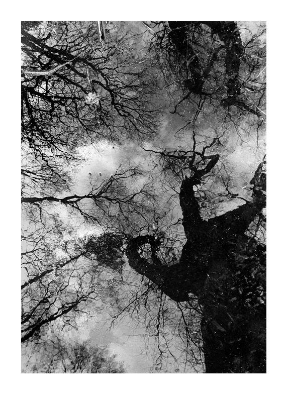 reflets arbres