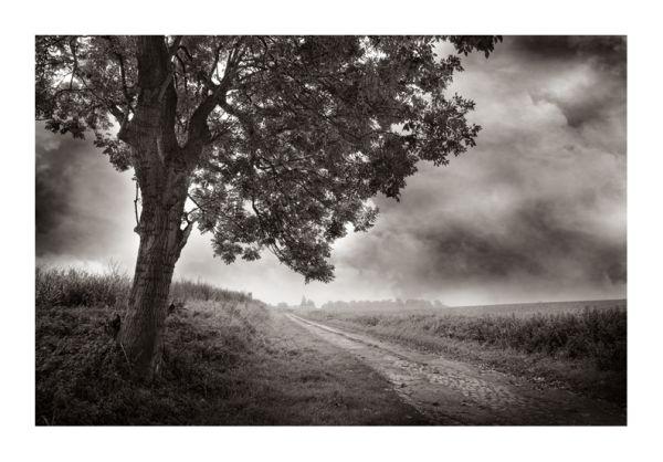 photographie arbre chemin pavé octobre