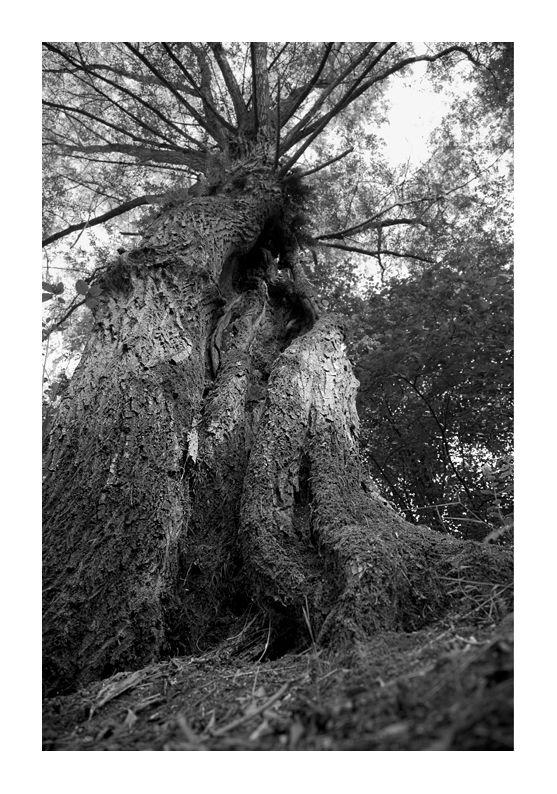 photographie arbre forêt marchiennes