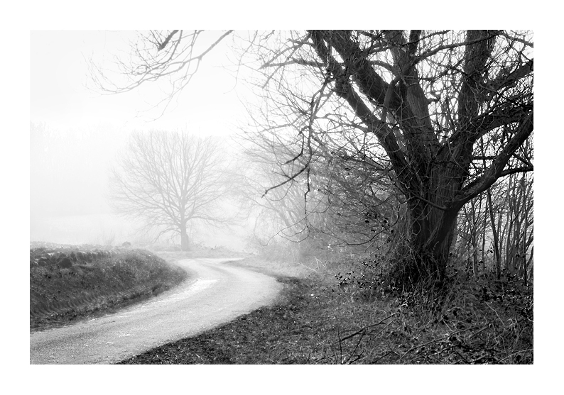 photographie paysage arbres brume