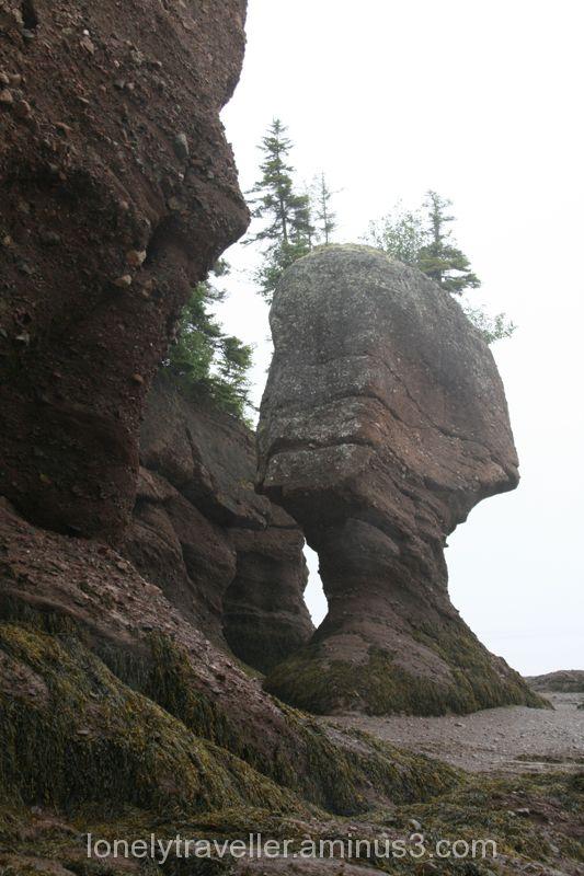 Hopewell Rocks II