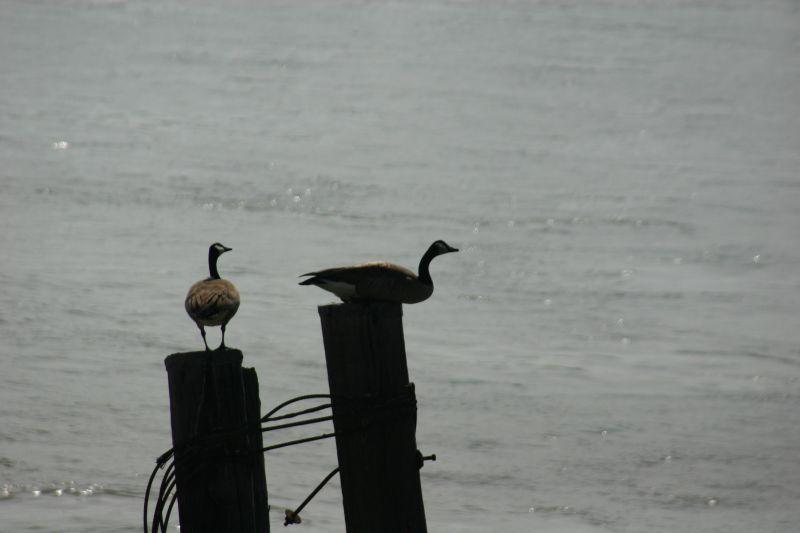 Pole Sitters